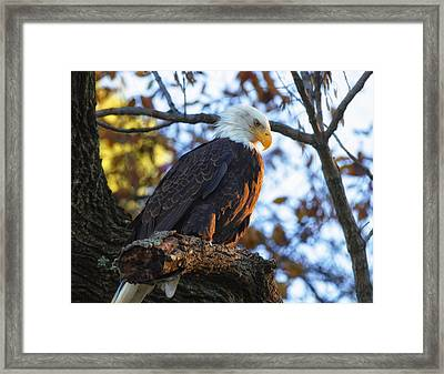 Framed Print featuring the photograph Bandit by Lori Coleman