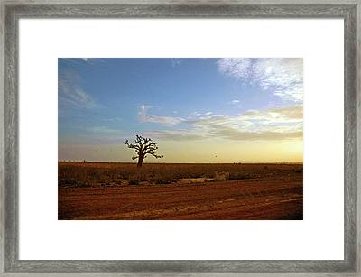 Framed Print featuring the photograph Baobab Tree At Sunset by Mark Duehmig