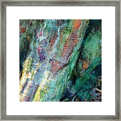 Bark L'verde  Framed Print