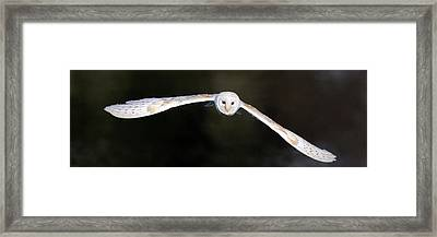 Framed Print featuring the photograph Barn Owl In Flight by Grant Glendinning