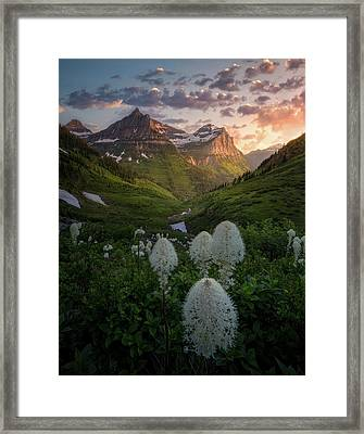 Framed Print featuring the photograph Bear Grass Bloom / Highline Trail, Glacier National Park  by Nicholas Parker