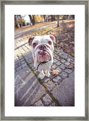 Beautiful Dog Framed Print by Freemixer