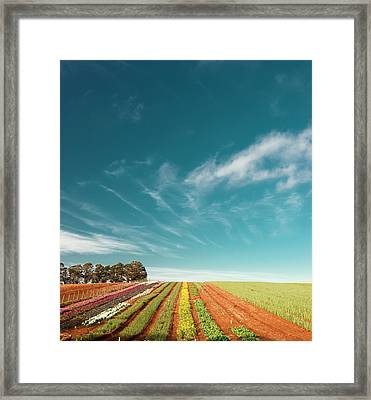 Framed Print featuring the photograph Beautiful Tulip Farm At The Table Cape In Tasmania. by Rob D