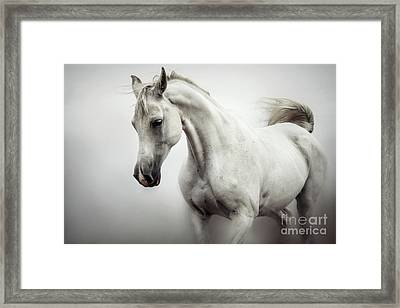 Framed Print featuring the photograph Beautiful White Horse On The White Background by Dimitar Hristov