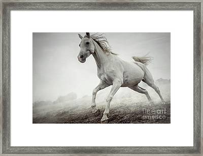 Framed Print featuring the photograph Beautiful White Horse Running In Mist by Dimitar Hristov