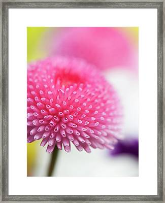 Beauty In  Nature Framed Print by Andrew Dernie