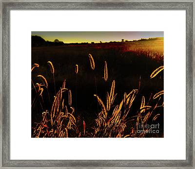 Beauty In Weeds Framed Print
