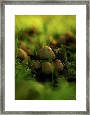 Beauty Of Fungus Framed Print