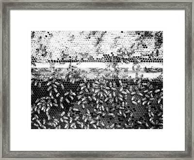 Bee Hive Framed Print