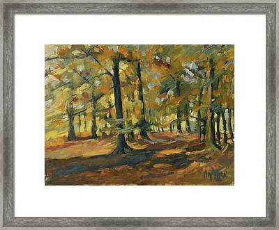 Beeches In Autumn Framed Print