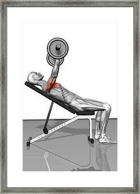 Bench Press Incline Part 1 Of 2 Framed Print by Medicalrf.com