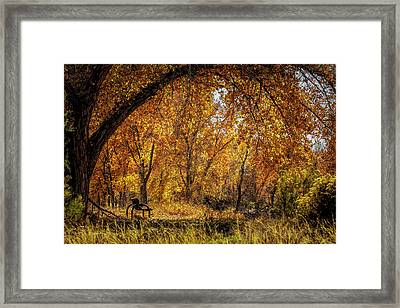 Bench With Autumn Leaves  Framed Print