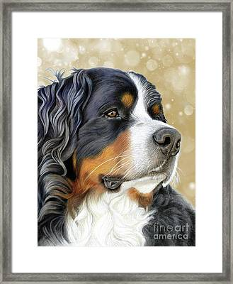 Framed Print featuring the mixed media Bernese Old Gold by Donna Mulley