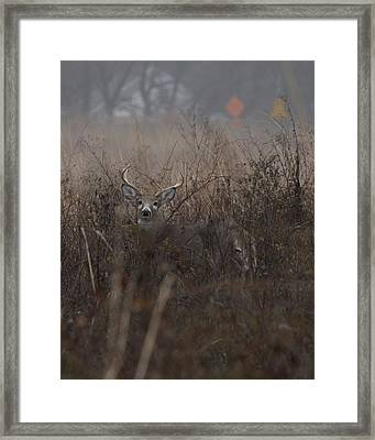 Big Buck Framed Print