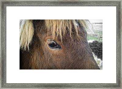 Framed Print featuring the photograph Big Eyes by Carl Young