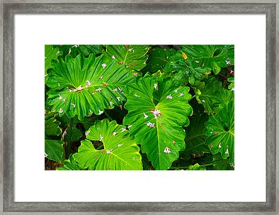 Big Green Leaves Framed Print