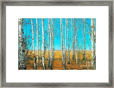Birch Grove Framed Print by Vangert