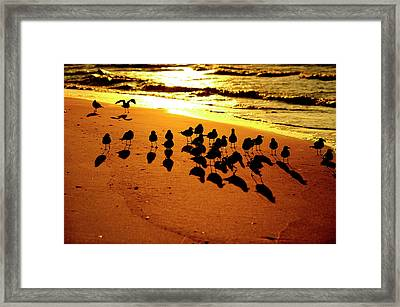 Bird Shadows Framed Print