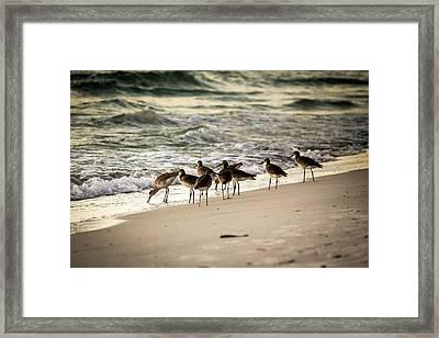Birds On The Beach Framed Print