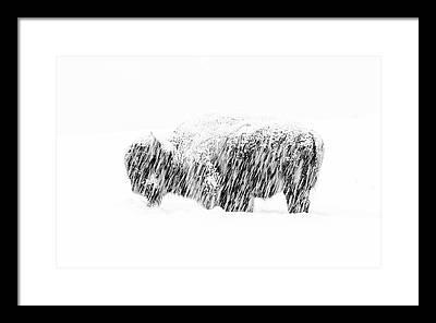Yellowstone Framed Prints