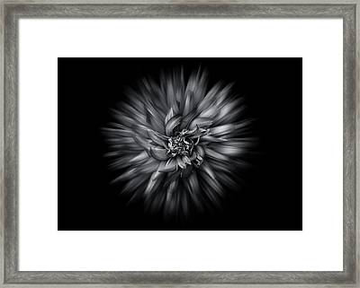 Framed Print featuring the photograph Black And White Flower Flow No 5 by Brian Carson
