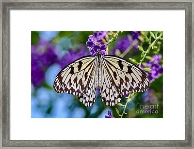 Black And White Paper Kite Butterfly Framed Print