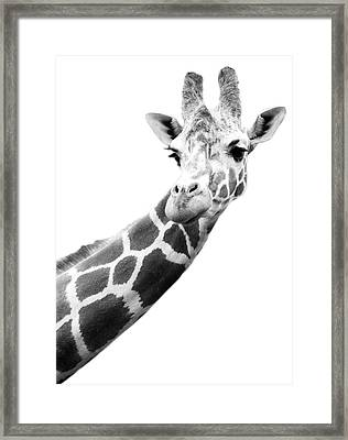 Black And White Portrait Of A Giraffe Framed Print by Design Pics