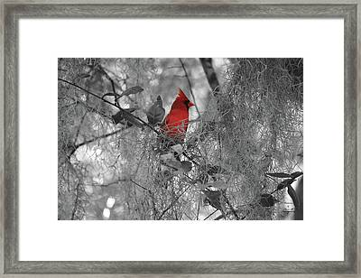 Black And White With A Splash Of Color Framed Print