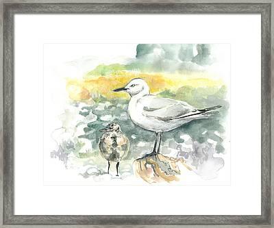 Black-billed Gull Family Framed Print