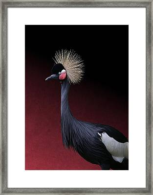 Framed Print featuring the photograph Black Crowned Crane Photographic Portrait by Debi Dalio