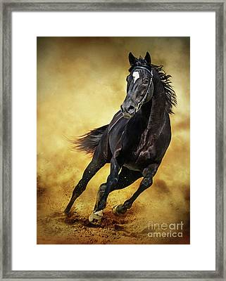 Framed Print featuring the photograph Black Horse Running Wild by Dimitar Hristov