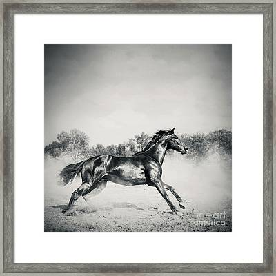 Framed Print featuring the photograph Black Stallion Horse by Dimitar Hristov