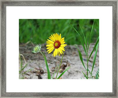 Bloom And Waiting Framed Print