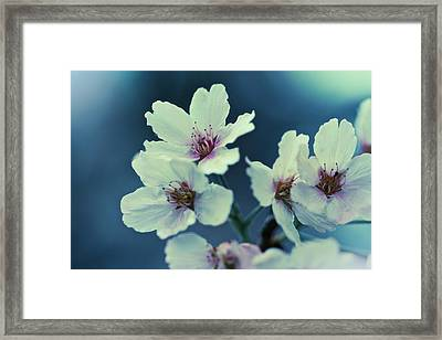 Framed Print featuring the photograph Blossoming - Flower Photography by Melanie Alexandra Price
