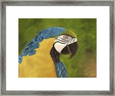 Blue And Gold Mccaw Framed Print