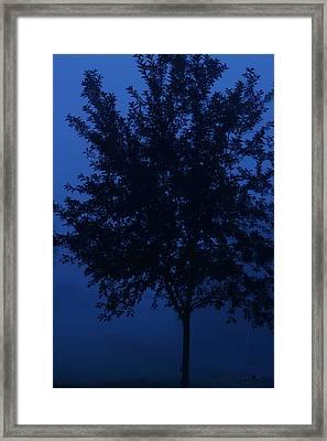 Blue Cherry Tree Framed Print