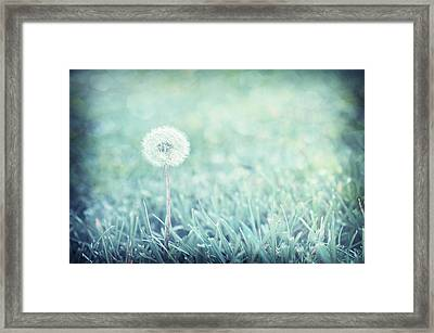 Framed Print featuring the photograph Blue Dandelion by Michelle Wermuth