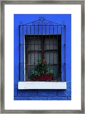 Blue-ming Beauty Framed Print