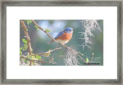 Bluebird In Dixie  Framed Print