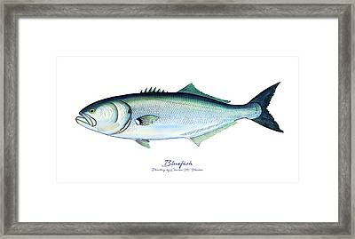 Bluefish Framed Print