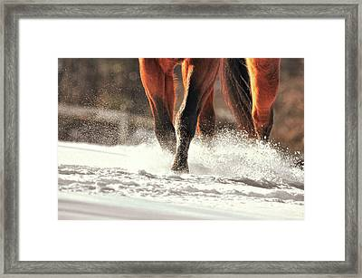 Blustery Trot Framed Print by JAMART Photography