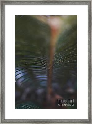 Bokeh Sparkles - Macro Framed Print