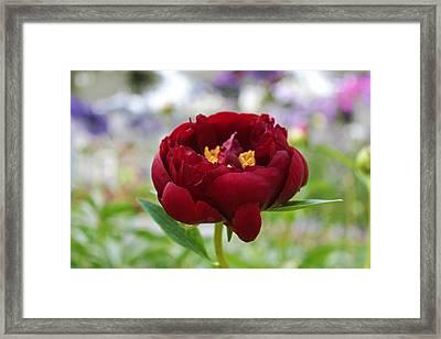 Bold Garnet Framed Print