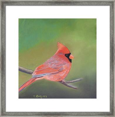 Bonded Pair - Male Cardinal Framed Print