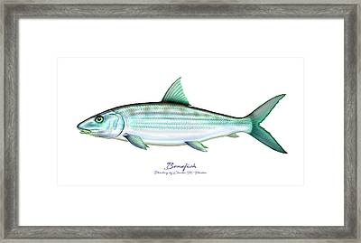Bonefish Framed Print