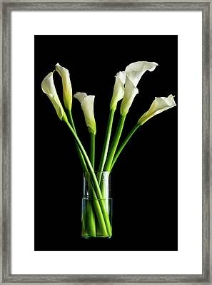 Bouquet Of Calla Lilies Framed Print