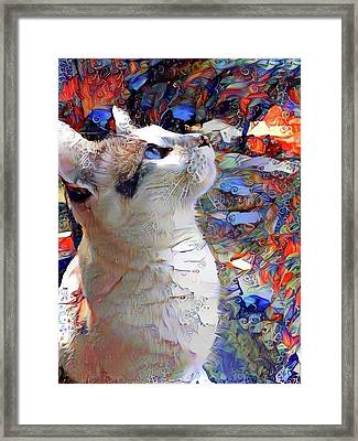 Brady The Half Siamese Half Tabby Cat Framed Print