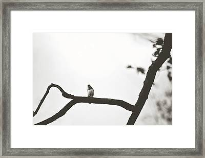 Framed Print featuring the photograph Branching Out by Sue Collura