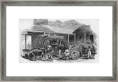 Brazilian Sugar Mill Framed Print by Hulton Archive