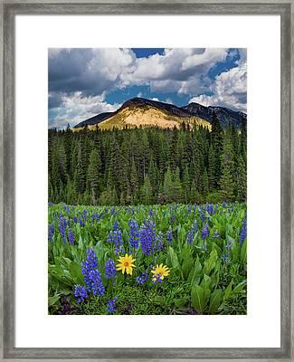 Bridger Teton National Forest Framed Print by Leland D Howard